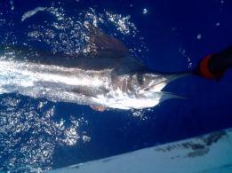 Punta Cana Fishing Tour (2)