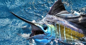 Punta Cana Fishing Tour (6)
